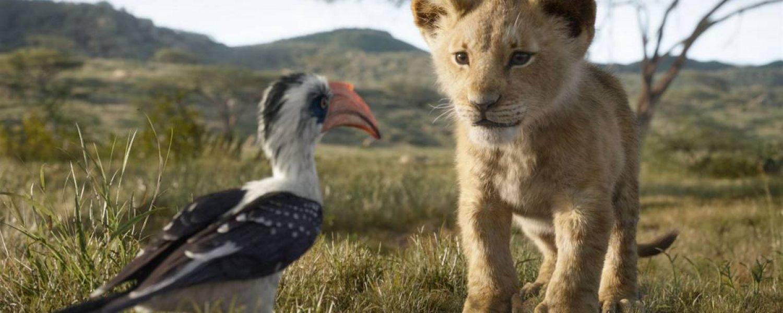 image film le roi lion pinsaguel cinéma plein air