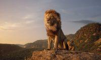 photo film le roi lion - Véo - Château de Pinsaguel - cinéma plein air